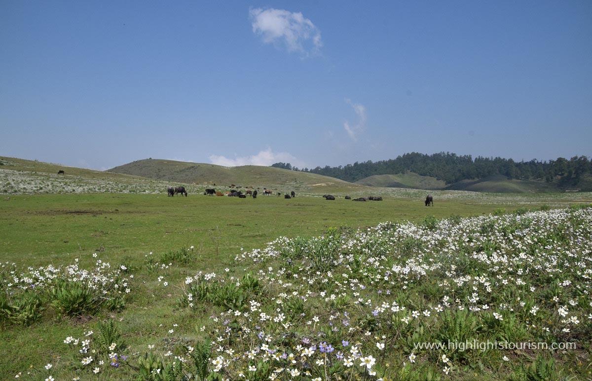 khaptad meadows