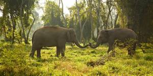 Elephants at Sauraha jungle safari