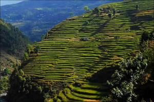 terraced hills of Rolwaling valley