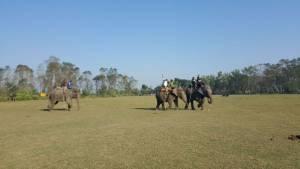 Elephant festival at Saurah Chitwan