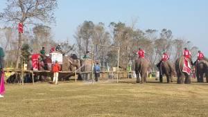 Elephant festival at Sauraha, chitwan