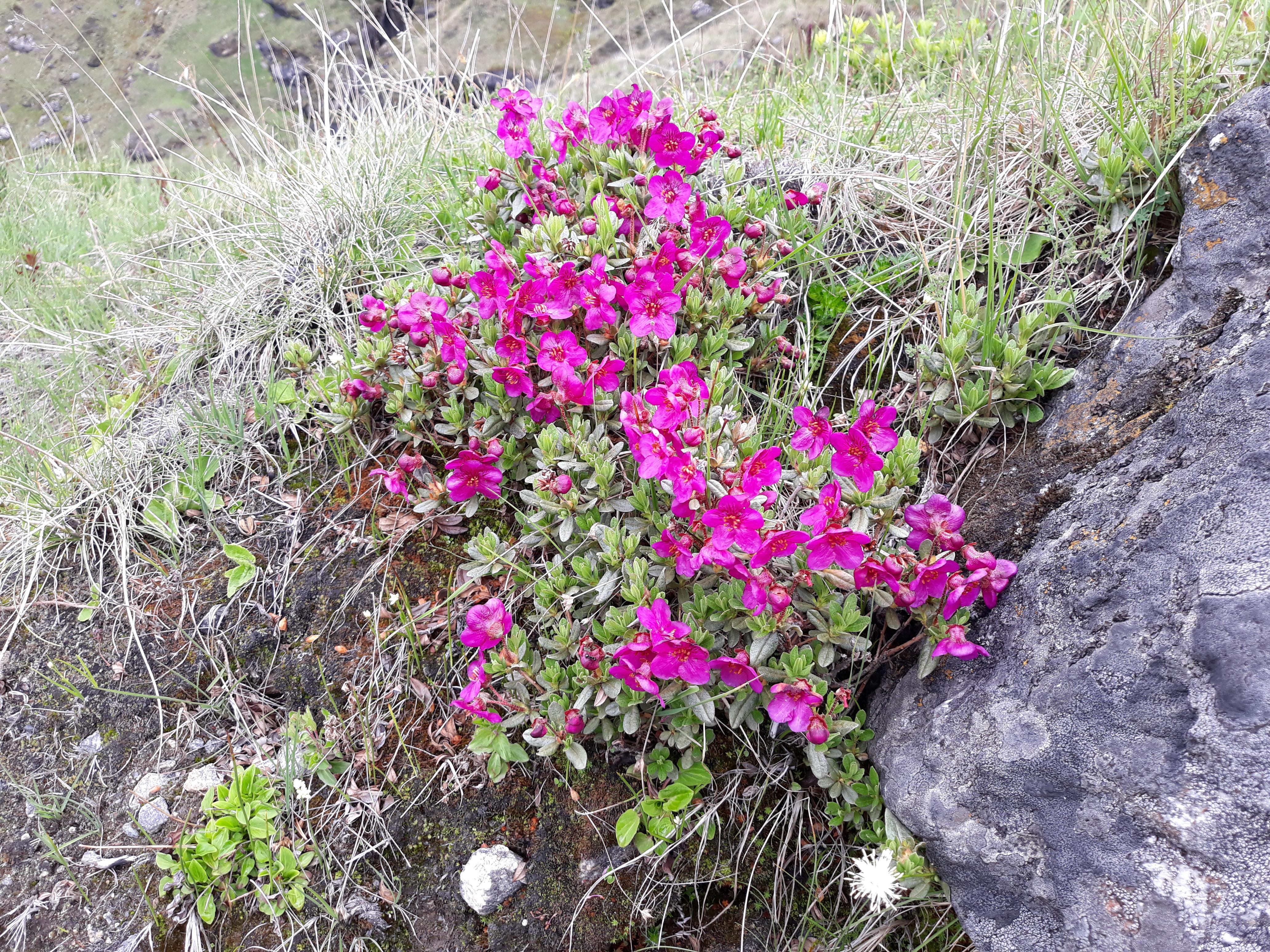 flower across the trail