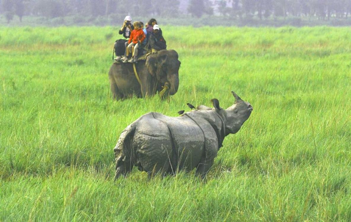 Jungle Safari in Chitwan park