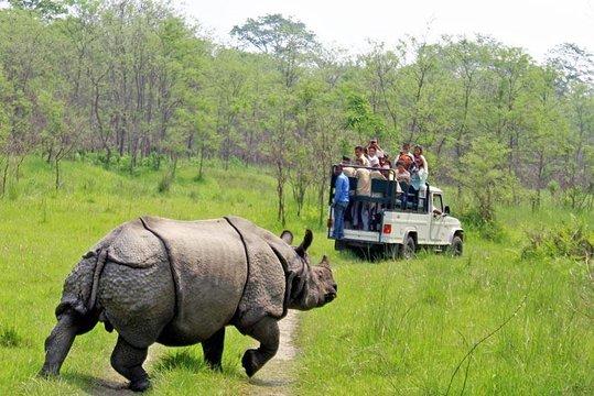 Wildlife Jungle safari at Sauraha, Chitwan