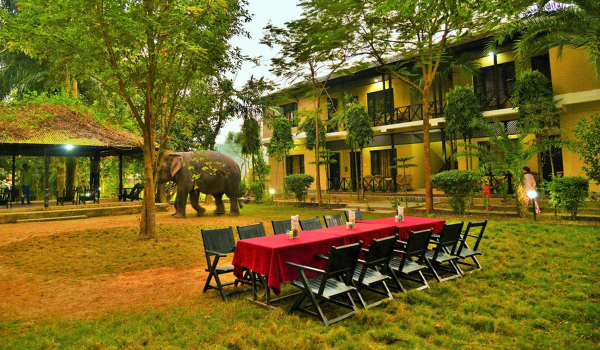 Sauraha Hotel